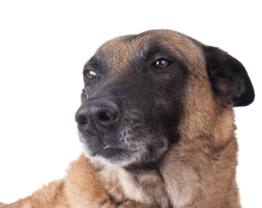 Why I couldn't stand by and let another owner hit his dog and you shouldn't either