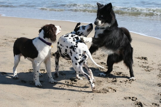 Your dog and group dynamics—keeping an eye on things…