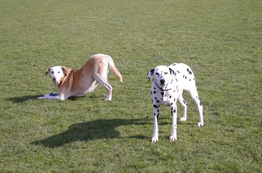 Who do you call? Simple advice for choosing a dog behaviourist