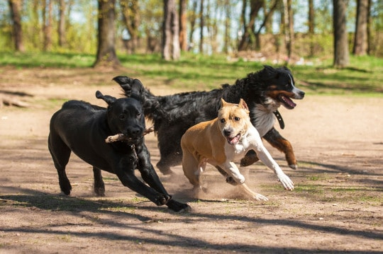 Over excited dogs – putting the time in -the Royal Navy way