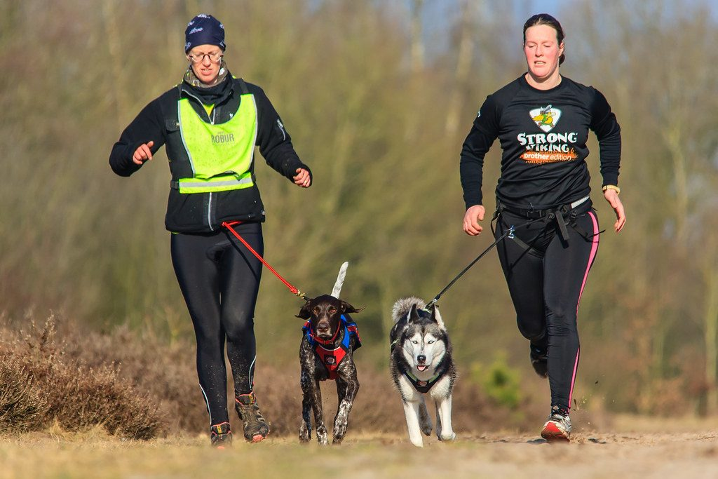 Canicross - fun for you and your dog - I think not...