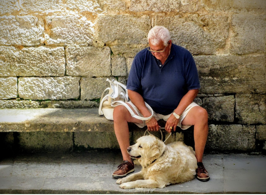 Humans and dog companionship
