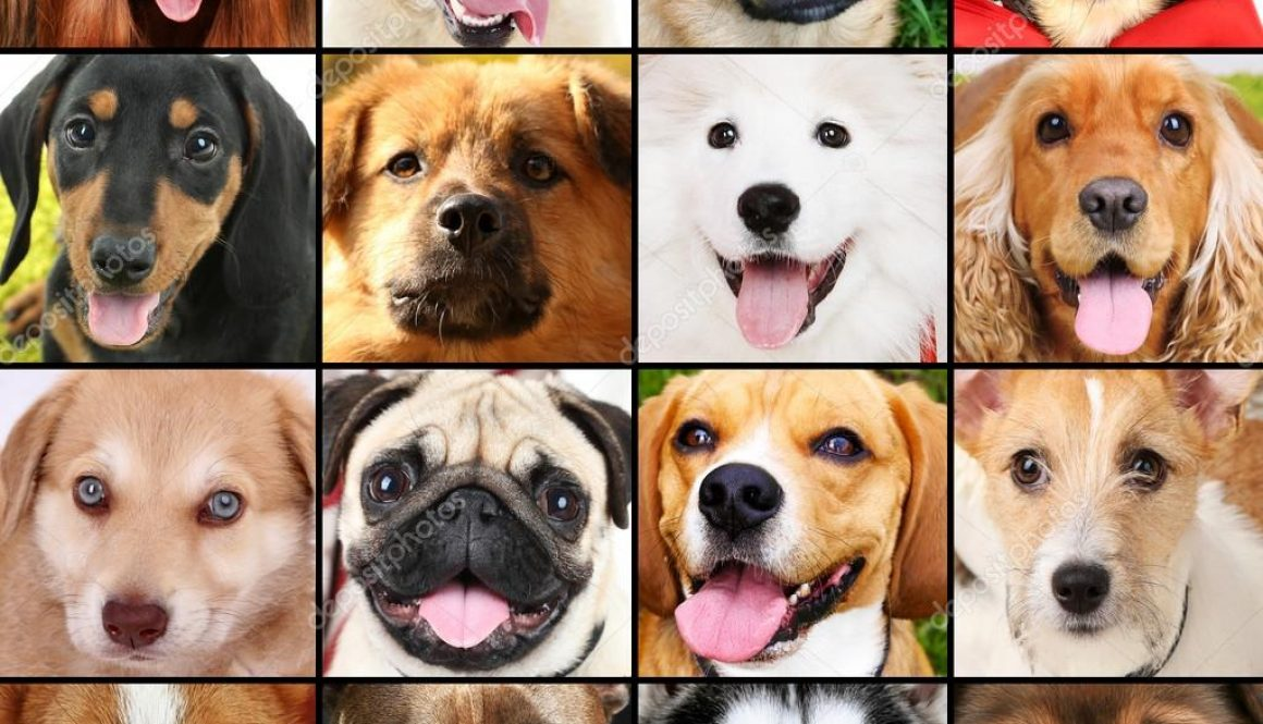 photo-collage-of-different-dogs