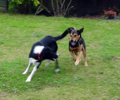 dogPlayrunning