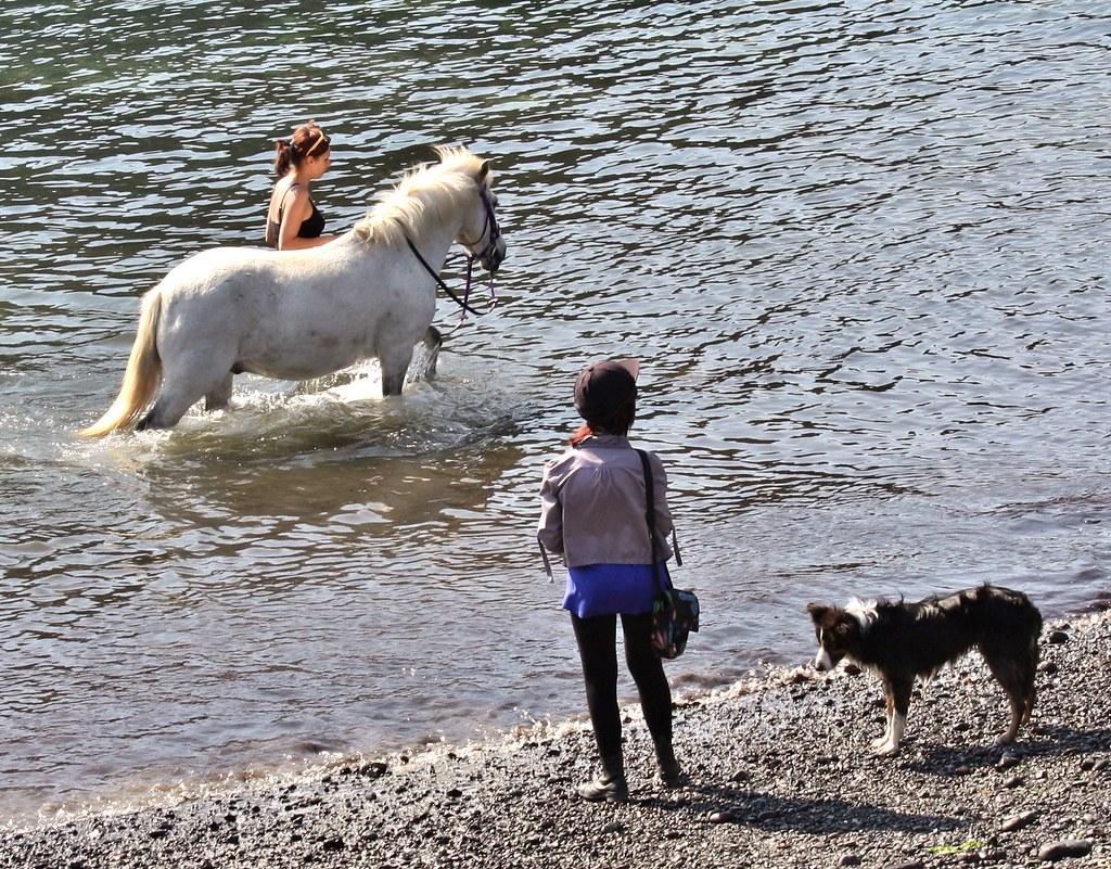 horseDogWater
