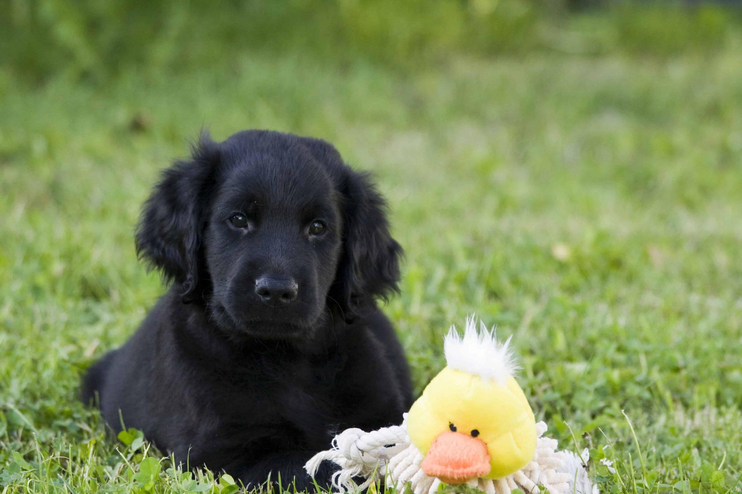 puppy-dog-animal-cute-pet-mammal-748378-pxhere.com_-scaled