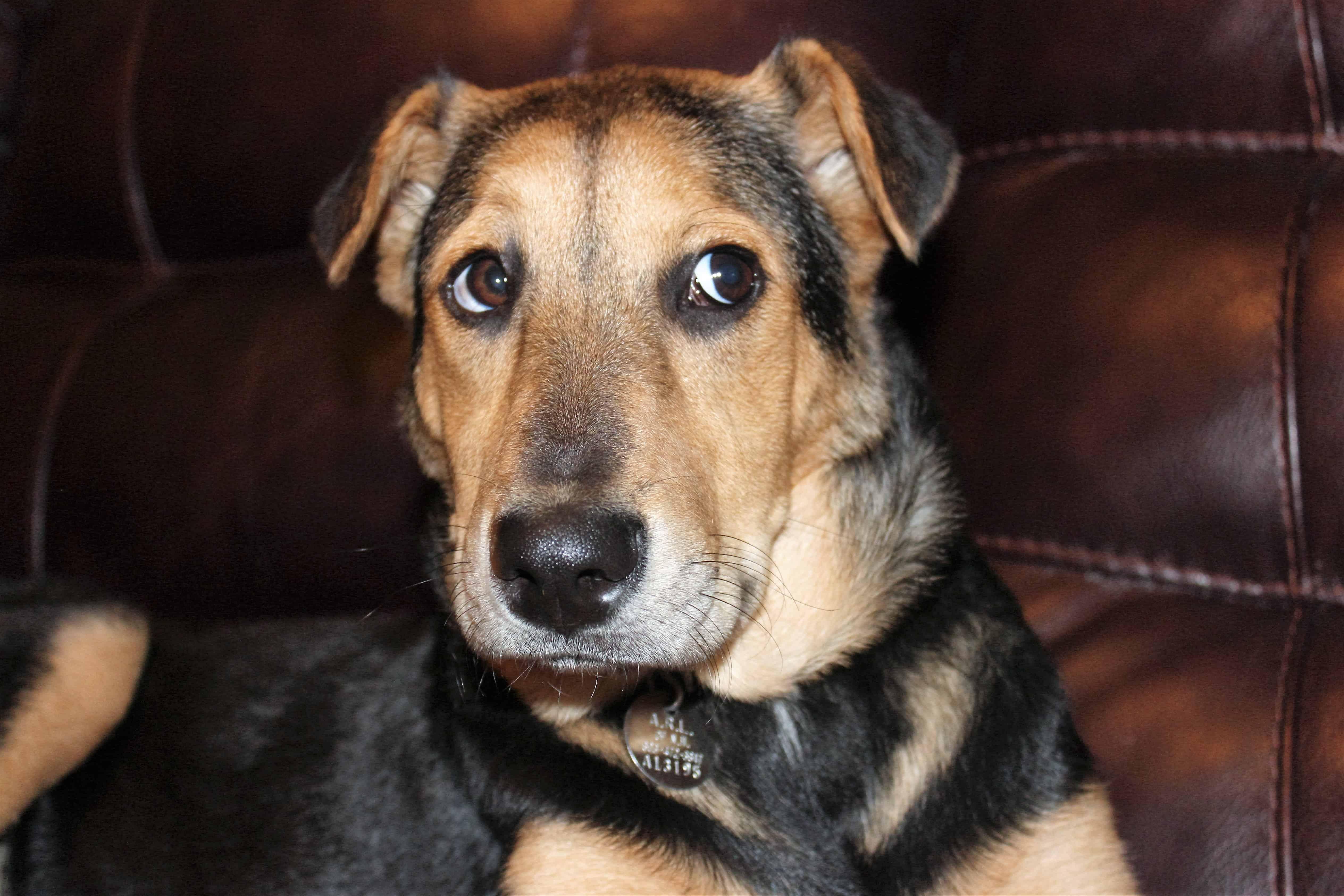 puppy-dog-mammal-vertebrate-dog-breed-animal-shelter-1270114-pxhere.com_