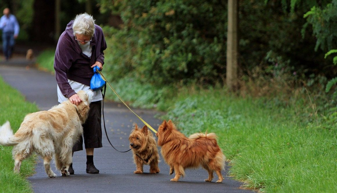 australian-terrier-older-person