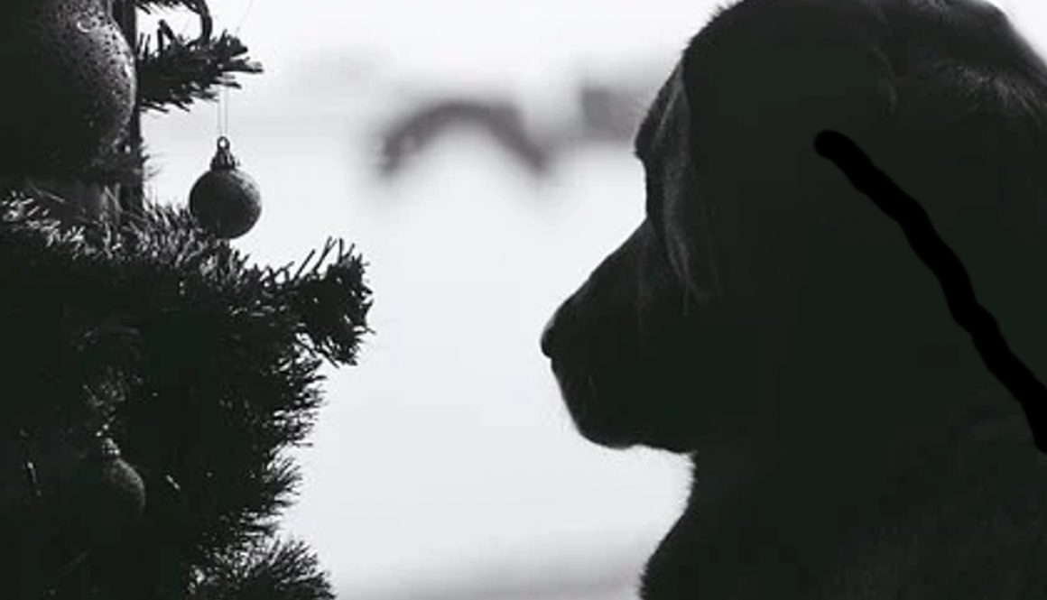 dogXmasBW