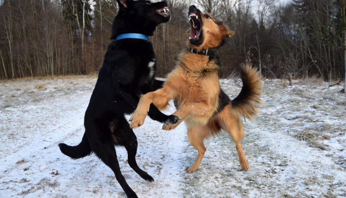 dogs_dogs_playing_fight_friendship_together_fighting_pet_canine-1167657